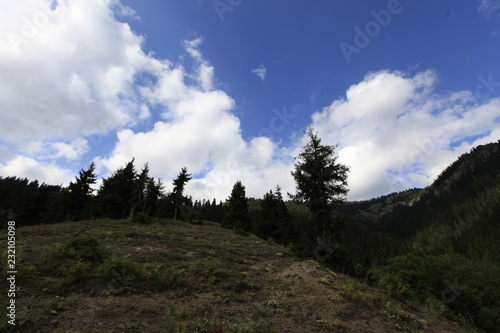 Foto op Plexiglas Grijze traf. Beautiful summer landscape in Savsat, Artvin province, Turkey