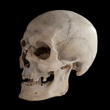 Real Human Skull, Close Up.