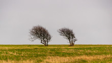 Moody Landscape With Two Wind Swept Trees On An Empty Field. Gloomy Winter Day Scene In The Countryside.