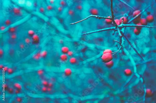 Fotografie, Obraz Autumn fantastic scene