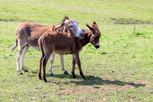 A Donkey And Her Foal