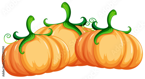 Staande foto Kids Pumpkin on white background