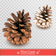 Realistic Dry Pine Cone With Snow Isolated On Transparent Background. Object For Design. Set Of Two Pinecones. Vector Illustration