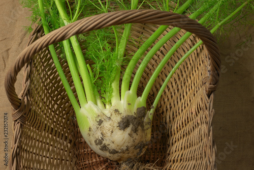 fennel just picked up in a wicker basket