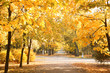 Beautiful autumn park with trees and dry leaves on ground