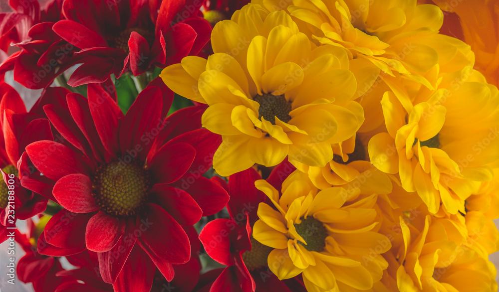 Wciąż życie czerwoni i żółci kwiaty