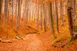 Forest during autumn in Rasnov, Romania - 232190649