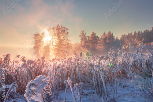 Photo sur Toile Saumon Winter nature landscape. Frosty scene in morning sunlight. January.