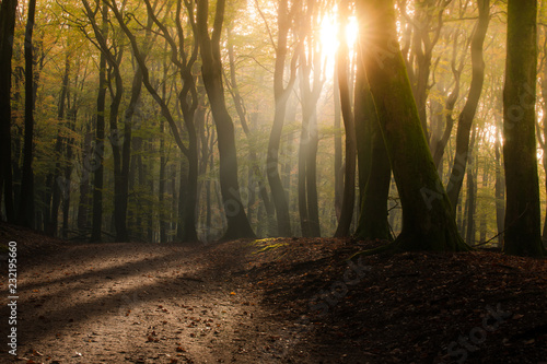 Fotobehang Herfst The most beautiful autumn forest in the Netherlands with mystical and mysterious views and atmospheric sunrises in the early misty mornings.