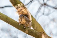 Squirrel Looking Surprised On A Tree Branch