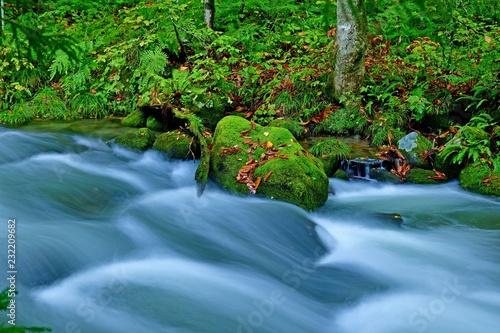 秋の奥入瀬渓流の情景