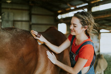 Girl Brushing A Chestnut Horse