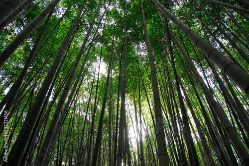 Foto op Plexiglas Bamboe Arashiama Bamboo Forest