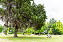 LeGrande Park In Montgomery, USA During Green Spring In Alabama Capital City During Sunny Day With Large Tree, Bench, Residential Houses