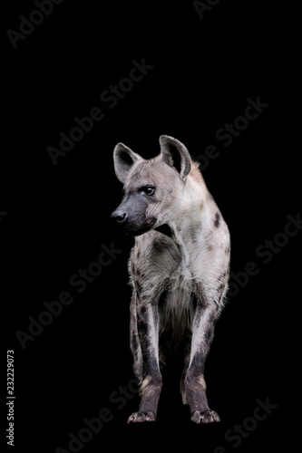 Deurstickers Hyena Close up Hyena isolated on black background