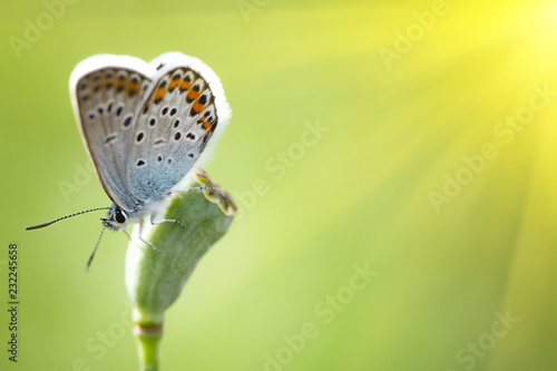 Foto op Aluminium Oranje butterfly on a flower close - up, with soft sunlight