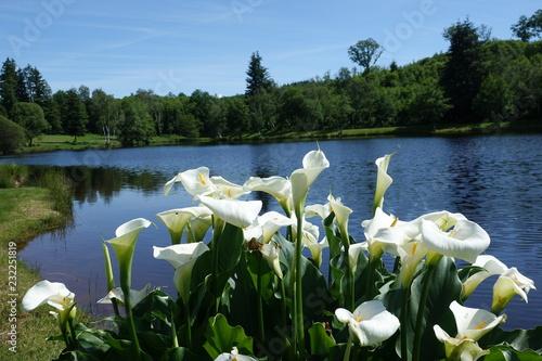 Foto auf Leinwand Blumenhändler bloemen aan het meer