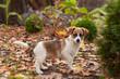 mały pies w ogrodzie