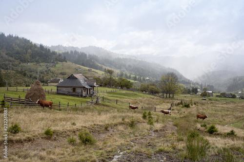 Fototapeta premium jesienny pejzaż