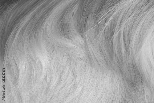 macro white goat hair