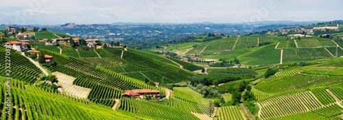 Photo Vineyards near Barbaresco, Cuneo, in Langhe