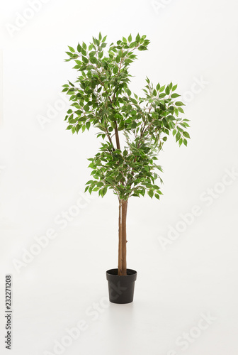 Black vase of plant green flower and green plant on the white background isolated.