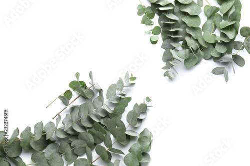 Poster Fleur Green eucalyptus branches on white background
