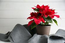 Christmas Flower Poinsettia On White Table