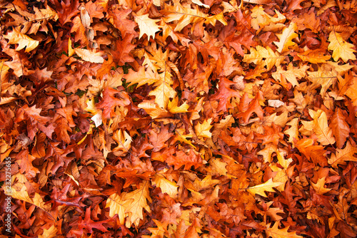 Colorful and bright background made of autumn leaves