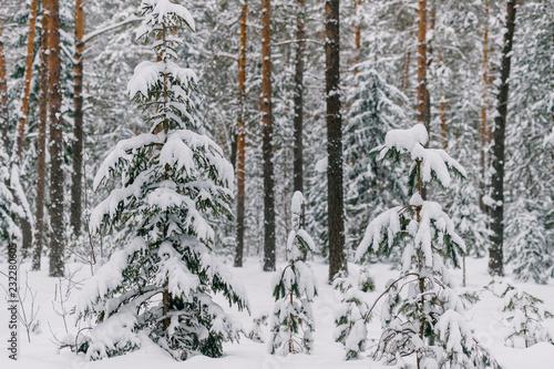 Fotografía  Fabulous magic fairy tale winter forest