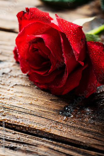 Fototapety, obrazy: Amazing red rose