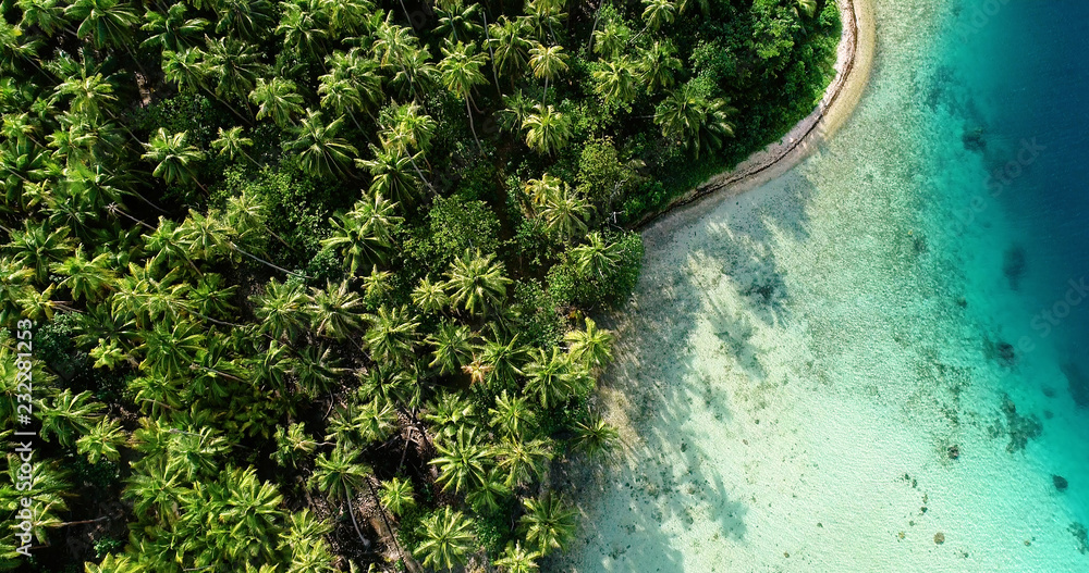 Fototapeta palm forest with lagoon in aerial view