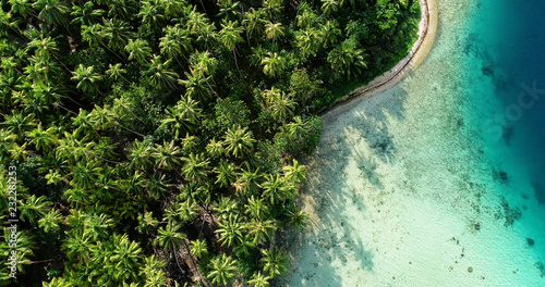 Spoed Foto op Canvas Palm boom palm forest with lagoon in aerial view