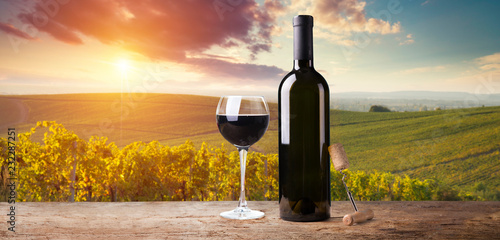 Papiers peints Vignoble Ripe wine grapes on vines in Tuscany, Italy. Picturesque wine farm, vineyard. Sunset warm light