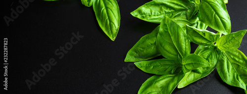 Fresh basil on a dark background Fototapet