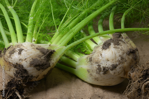 fennel on jute cloth