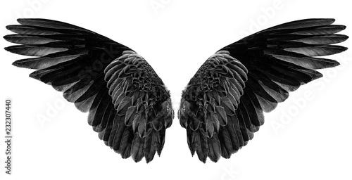 Foto  black wings on a white