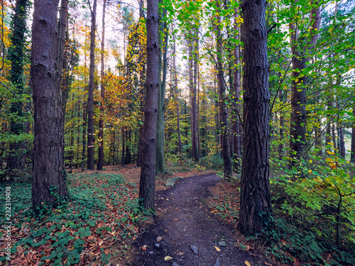 Foto op Plexiglas Aubergine wide angle shoot Autumn forest morning,Northern Ireland