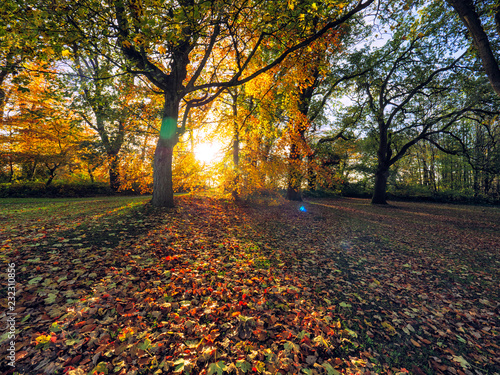 wide angle shoot Autumn forest morning,Northern Ireland