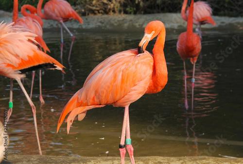 Tuinposter Flamingo orange flamingo in contrast with dark background