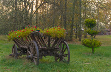 Wooden Decorative Carriage With Flower Bed Of Winding Flowers On Green Meadow At Sunset. Horizontal View