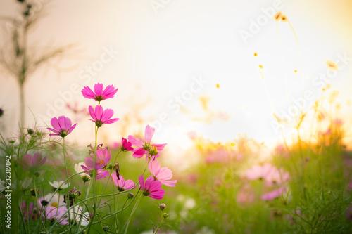 Tuinposter Lente Cosmos flower garden