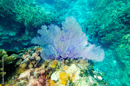 Beautiful blue corals on reefs