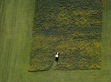 Overhead View Of Crops Being Harvested