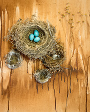 A Collection Of Bird`s Nests W...