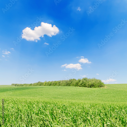 Deurstickers Platteland agriculture green field and blue sky with clouds