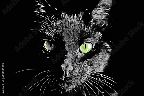 Photo sur Toile Croquis dessinés à la main des animaux Cat face vector black and white realistic hand-drawn scratchboard style illustration