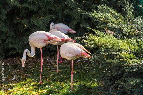 Tuinposter Flamingo Pink flamingo