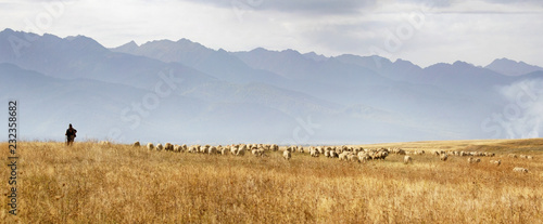 Fotobehang Schapen Pastoral: lonely shepherd with his flock of sheep grazing the meadows at the