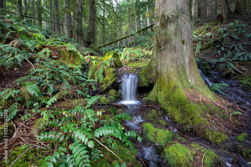 Fototapety, obrazy: Small stream Mt. Rainier National Park, WA, USA.